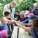 Kinder berühren ein Wabenrähmchen an der Lernbienenbeute