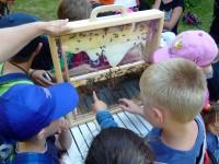 Kinder vor Bienenschaufenster