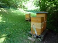 4 Bienenbeuten des Kaiser-Heinrich-Gymnasiums Bamberg
