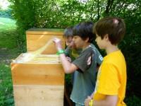 Jungs der Bienen-AG heben die Abdeckfolie an und schauen in die Beute