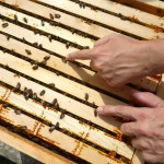 Bienen streicheln