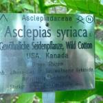 Schild mit Pflanzenbeschreibung