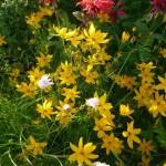 rote, gelbe und weiße Blumen