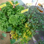 Kräuterbalkonkasten für Insekten