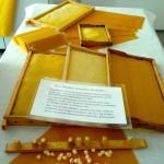 Wachs-und-Waben-Ausstellung im Fachzentrum Bienen, FWG Veitshöchheim