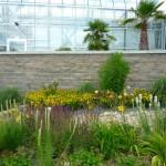 Bepflanzung der Außenanlage an der LWG Veitshöchheim, An der Steige