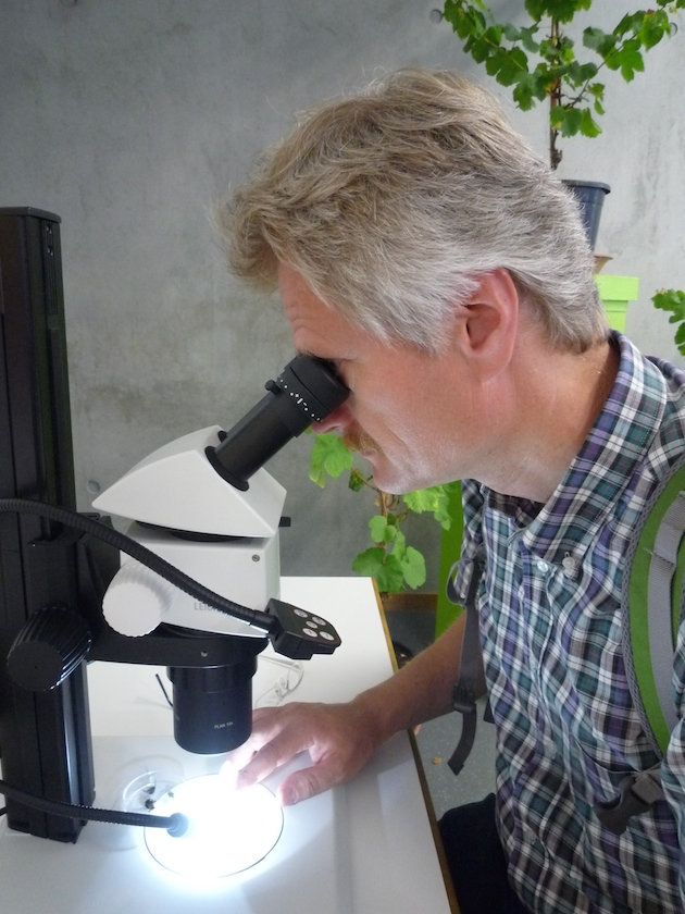 Blick ins Mikroskop, Fachzentrum Analytik