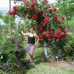 Rosenspalier mit Ilona