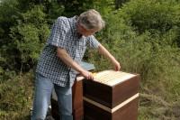 Reinhold entnimmt die erste Honigwabe