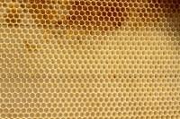 Honigwabe / Foto © Elke Puchtler