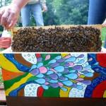 Conny, setzt behutsam die mit Bienen besetzte Wabe in die neue Zarge
