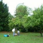 Die Sterwarte … ein schöner Bienenstandort mit Wiese und Bäumen