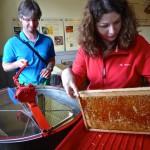 Bestücken der Honigschleuder