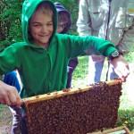 Schüler hält mit Bienen vollbesetzte Wabe hoch