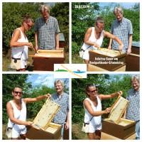 Felicitas Sauer beim Honigernten (Fotocollage)