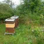 Bienenvölker / drei Bienenstöcke