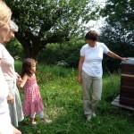 Vorsichtige Distanz zu den Bienenvölkern