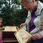 Reinhold zeigt Lola eine Honigwabe mit Bienchen