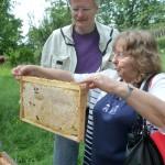 Biggi hält ihre selbst gezogene Honigwabe