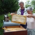 Gabi betrachtet ihre selbst gezogene Honigwabe