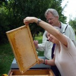 Gabi zieht eine Honigwabe