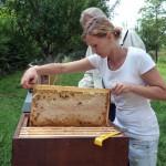 Katharina zieht eine Honigwabe