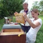 Katharina betrachtet ihre selbst gezogene Honigwabe
