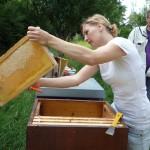 Katharina kehrt eine Honigwabe ab