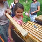 Lolas kritischer Blick auf die Honigwabe