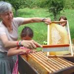Während Gabi die Bienen von der Wabe abkehrt, lockert Lola sogleich die nächste Wabe mit den Fingern