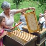 Gabi kehrt Bienen von der Wabe, Lola sieht zu