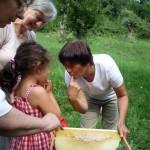 Honig schlecken mit dem Finger zwischen den Bienen