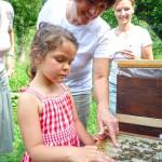 Lola streicht sanft über die Bienen