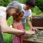 Gabi, Lola und Ilona streicheln Bienen