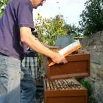 Reinhold bei der Bienenpflege