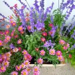 Blumen aus der Hofstadtgärtnerei