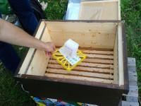 Entnahme des Liebig-Dispensers nach der Ameisensäurebehandlung