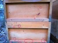 Durchfallspuren von Bienen