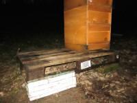 Frische Palette für die KHG-Bienen