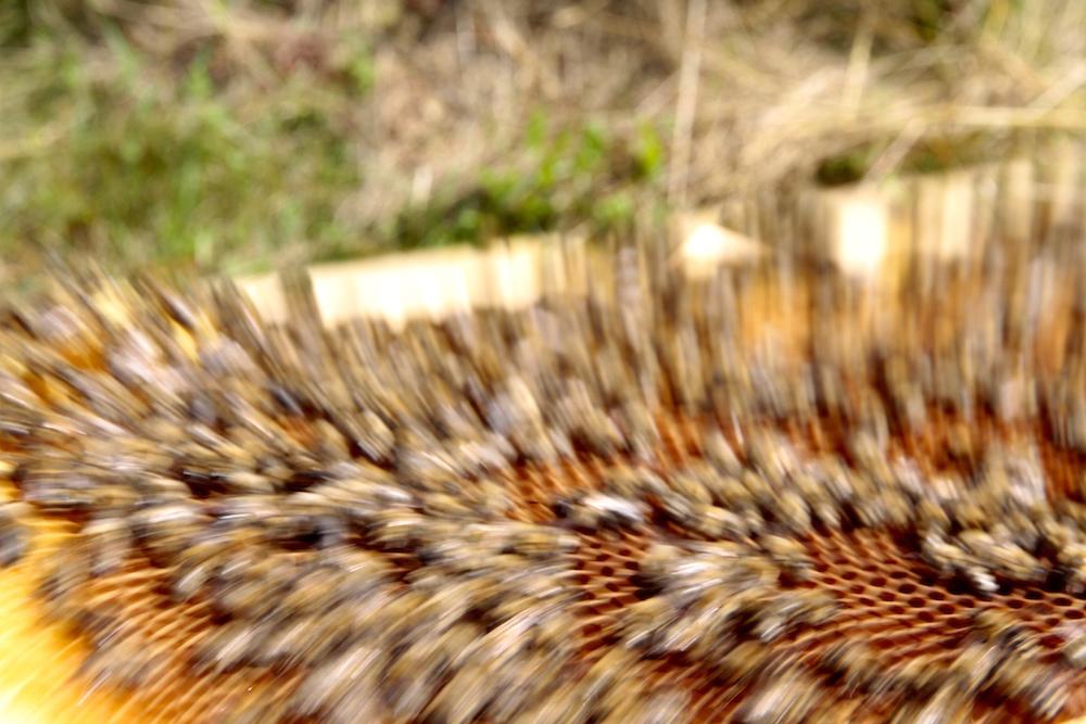Fotografisches Experiment mit Bienen, Foto © Elke Puchtler