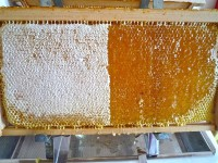 Honigwabe, halbentdeckelt