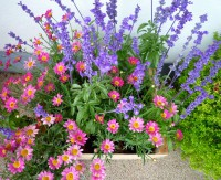 987-Balkonpflanzen-Bienennahrung