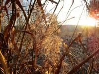 Sonnenuntergang in den Buger Wiesen