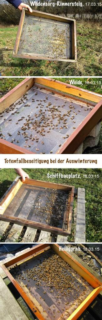 Vergleich des Polleneintrags im Vorfrühling 2015