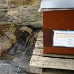 Bienenvolk Heiliggrab Bamberg