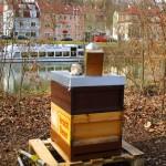 Lehrbienenstand auf der Erba-Insel