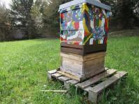 Bienenvolk an der Sternwarte in Bamberg