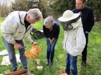 Wir betrachten ein mit Bienen besetztes Rähmchen