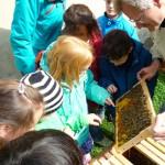 Bienenstreicheln am Volk der Villa Dessauer