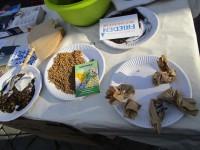Samenbömbchen für Bienentrachtpflanzen